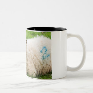 Two tone mug with a grouchy looking sheep design