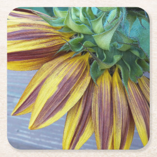 Two Tone Sunflower Head Floral Square Paper Coaster