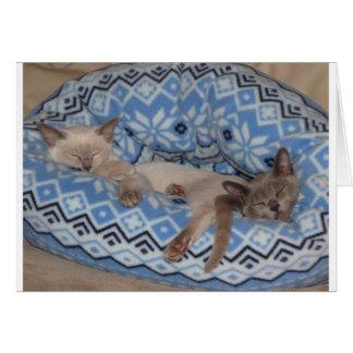 Two Tonkinese kittens sleeping Card