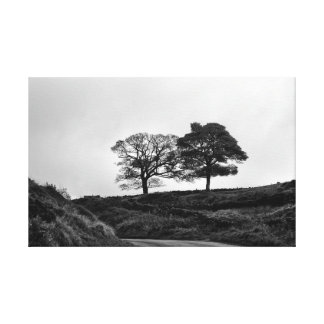 Two trees in Black and White Canvas Print
