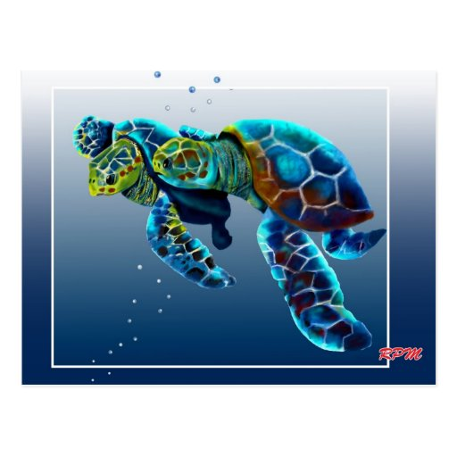 Two Turtles Postcard