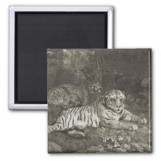 Two Tygers, engraved by the artist, pub. 1788 (etc Square Magnet