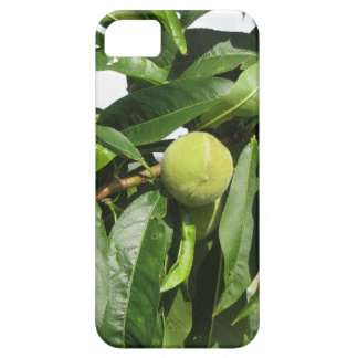 Two unripe green peaches hanging on a peach tree iPhone 5 covers