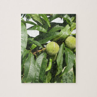 Two unripe green peaches hanging on a peach tree jigsaw puzzle