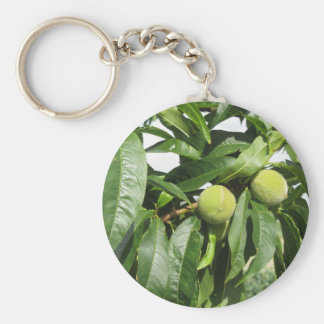 Two unripe green peaches hanging on a peach tree key ring