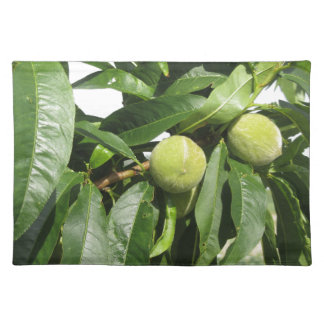 Two unripe green peaches hanging on a peach tree placemat