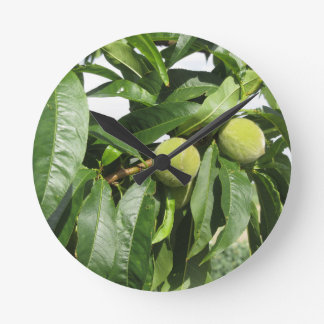 Two unripe green peaches hanging on a peach tree round clock