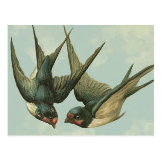 Two Vintage Swallows Postcard