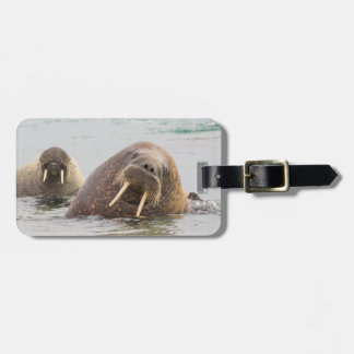 Two walruses in water, Norway Luggage Tag