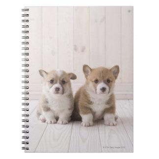 Two Welsh Corgi Sitting Notebooks