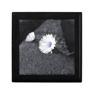 Two white daisies lying on the stone at sunset gift box