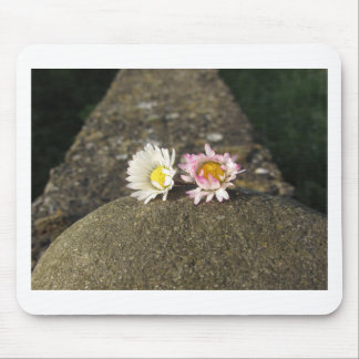 Two white daisies lying on the stone at sunset mouse pad