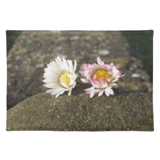 Two white daisies lying on the stone at sunset placemat