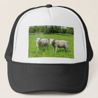 Two white dutch sheep in green spring meadow trucker hat