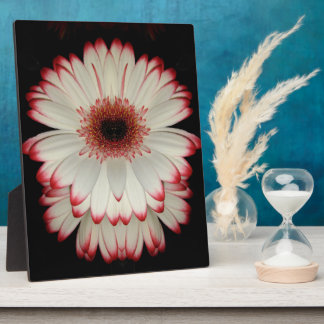 Two White Gerbera Daisies Plaque