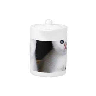 Two white kittens in basket on black background.JP