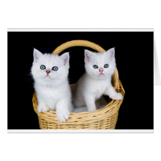 Two white kittens in basket on black background.JP Card