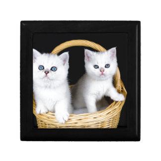 Two white kittens in basket on black background.JP Gift Box