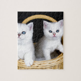 Two white kittens in basket on black background.JP Jigsaw Puzzle
