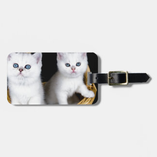 Two white kittens in basket on black background.JP Luggage Tag