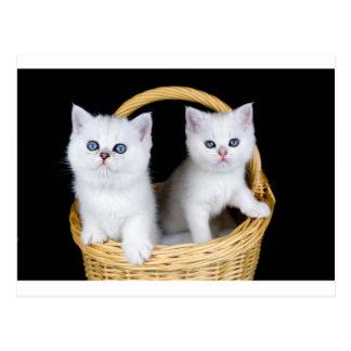Two white kittens in basket on black background.JP Postcard