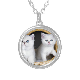 Two white kittens in basket on black background.JP Silver Plated Necklace
