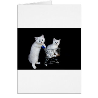 Two white kittens with shopping cart on black.JPG Card
