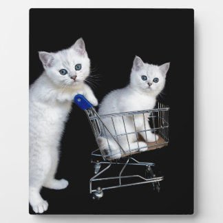 Two white kittens with shopping cart on black.JPG Plaque