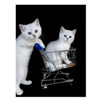Two white kittens with shopping cart on black.JPG Postcard