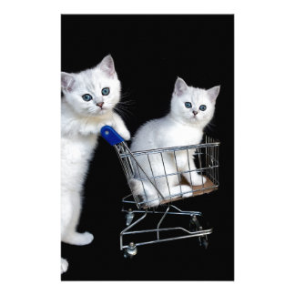 Two white kittens with shopping cart on black.JPG Stationery