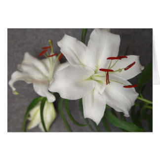 Two White Lilies Card