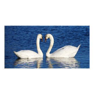 Two White Swans Form Heart Sign Card