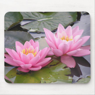 Two wild pink waterlilies in a pond mouse pad