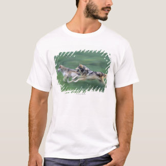 Two wolves in mountain meadow T-Shirt