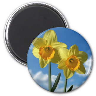 Two yellow Daffodils 2.2 6 Cm Round Magnet