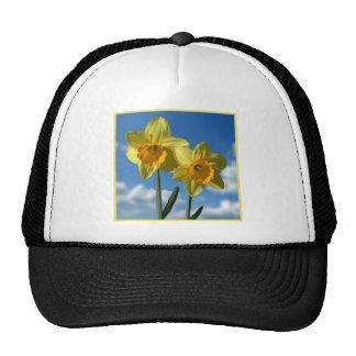 Two yellow Daffodils 2.2 Cap