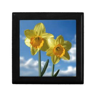Two yellow Daffodils 2.2 Gift Box