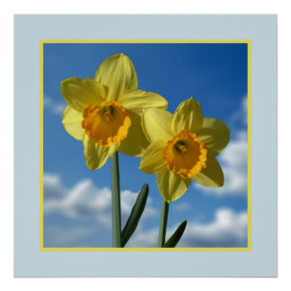 Two yellow Daffodils 2.2 Poster