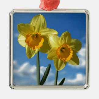 Two yellow Daffodils 2.2 Silver-Colored Square Decoration