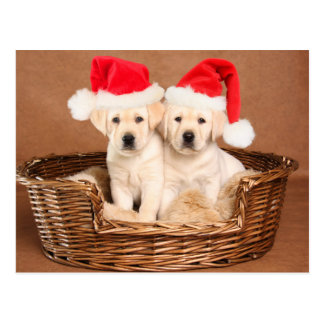 Two Yellow Lab Christmas Puppies Postcard