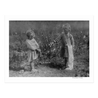 Two Young Girls Picking Cotton Photograph Postcard