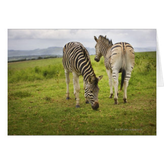 Two zebras, South Africa Card