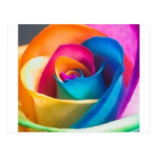 Tye Dye single rose Postcard