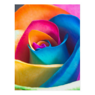 Tye Dye single rose Postcard
