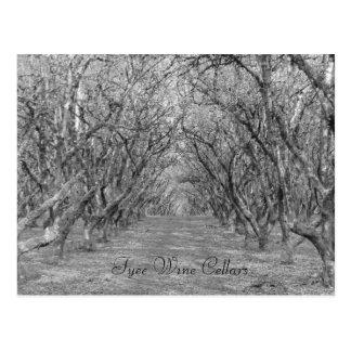 Tyee Hazelnuts Postcard