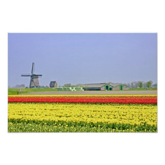 Typical dutch: Windmill and tulipfields Poster