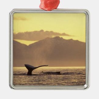 U.S.A., Alaska, Inside Passage Humpback whale at Metal Ornament