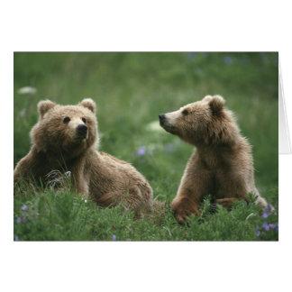 U.S.A., Alaska, Kodiak Two sub-adult brown bears Card