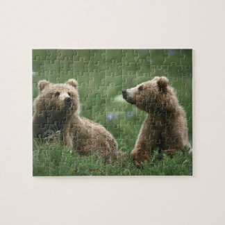U.S.A., Alaska, Kodiak Two sub-adult brown bears Jigsaw Puzzle
