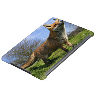 UK, England. Red Fox Vulpes vulpes) in Case For iPad Air